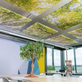 Bestel eenvoudig plafondpanelen: geluiddempend én sfeervol